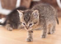 03_kittycat_klein